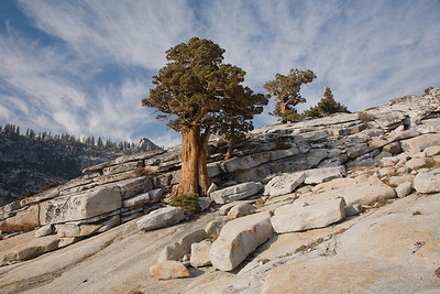 Olmstead Point Trees 8516
